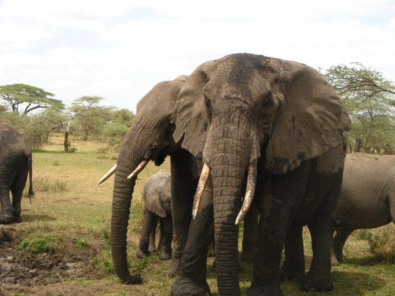 11 Days Lodge Safari Serengeti and Ngorongoro Crater